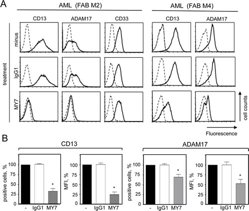 Effect of the anti-CD13 MY7 on surface CD13 and ADAM17 expression in primary AML cells.