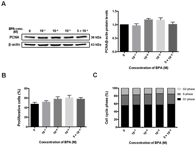 HTR-8/SVneo cell proliferation after BPA treatment.