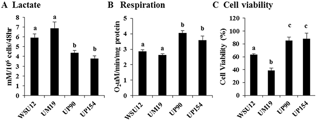 Increased glycolysis in HPV-negative cells and increased respiration in HPV-positive HNSCC.