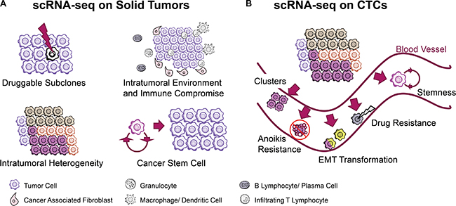 scRNA-seq technology facilitates cancer research when coping with solid tumor tissues and circulating tumor cells.