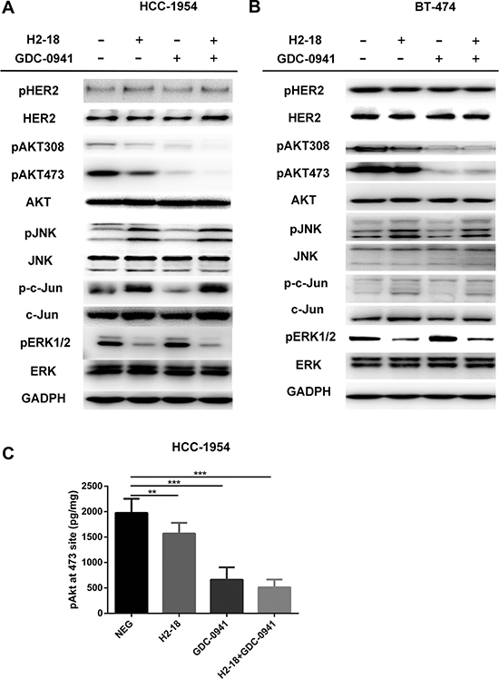 H2-18 plus GDC-0941 inhibits the ErbB2 signaling in breast cancer cell lines HCC-1954 and BT-474.