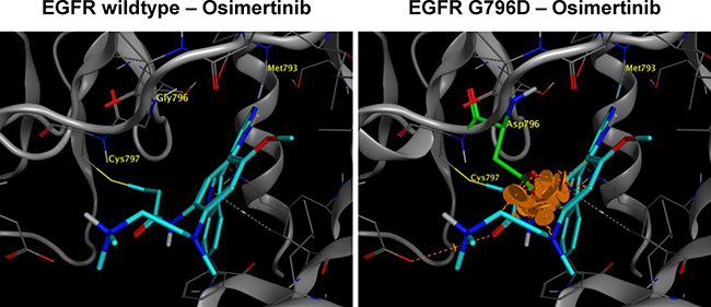 Structural modeling of EGFR G796D in complex with osimertinib.