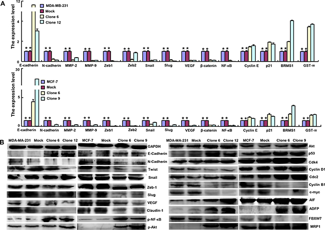 ING5 expression modulated the expression of phenotype-related molecules in breast cancer cells.