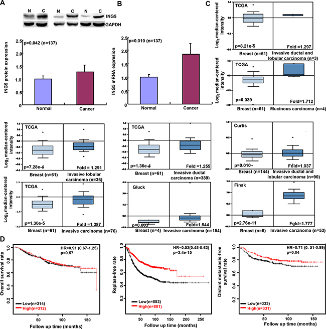 ING5 expression in breast cancer and its prognostic significance.