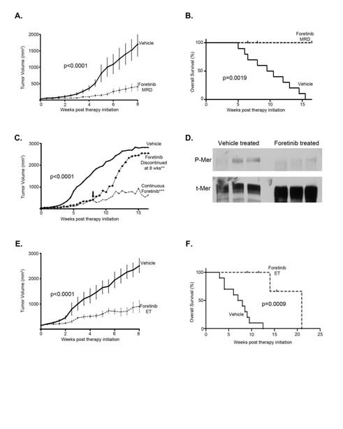 TAM RTK inhibition with Foretinib is an effective treatment for established subcutaneous human glioma tumors and increases overall survival.