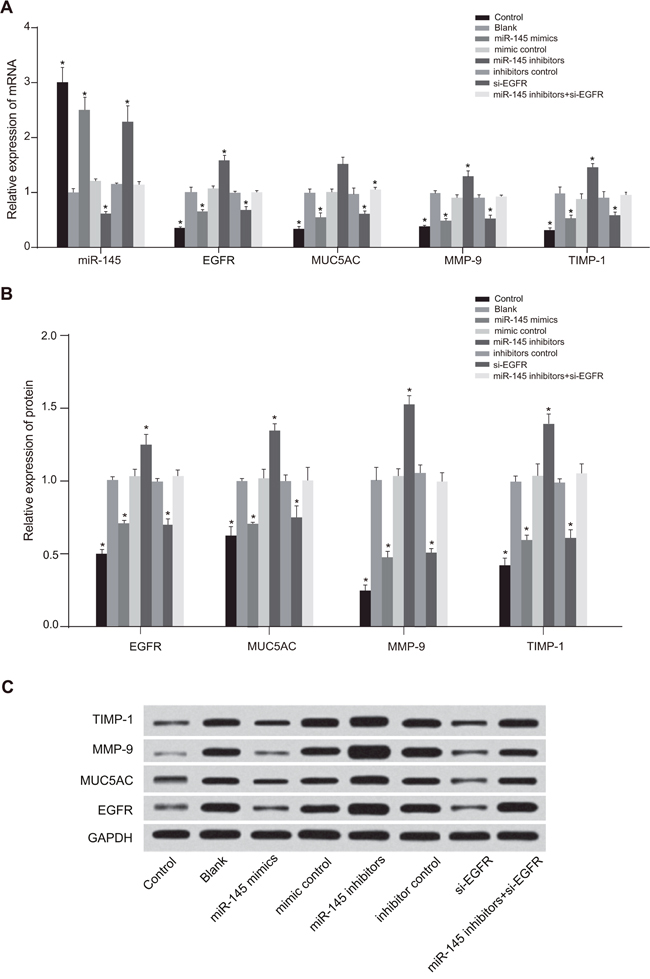 Comparison of expressions of EGFR and other cytokines among the control, blank, miR-145 mimics, mimic control, miR-145 inhibitors, inhibitor control, si-EGFR and miR-145 inhibitors + si-EGFR groups.