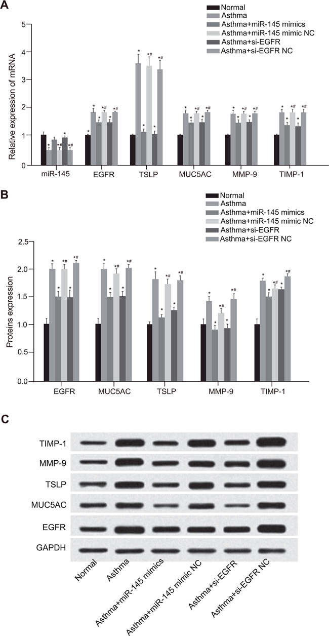 Comparison of miR-145, EGFR and other cytokines expressions among the normal, asthma, asthma + miR-145 mimic, asthma + miR-145 mimic NC, asthma + si-EGFR and asthma + si-EGFR NC groups.