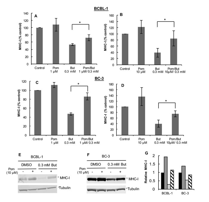 Pretreatment with Pom at 1 µM or 10 µM prevents the KSHV lytic-induced down-regulation of MHC-I in BCBL-1 and BC-3 cells.