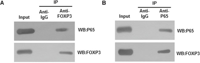 Interaction between FOXP3 and p65.
