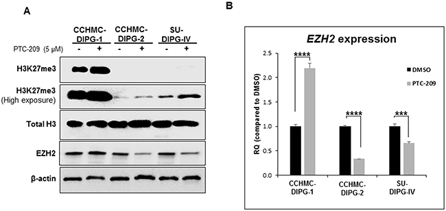 BMI-1 downregulation by PTC-209 leads to an increase in H3K27me3 levels.