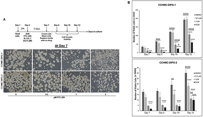 BMI-1 downregulation by PTC-209 irreversibly impairs the self-renewal capacity of DIPG cells.