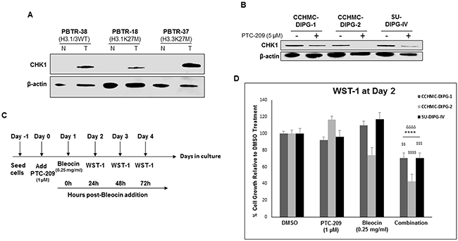 PTC-209 enhances radiosensitivity of DIPG cells to DNA damage.