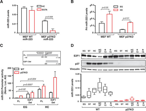 Contact inhibition stimulates miR-223 promoter activity by decreasing E2F1 expression.