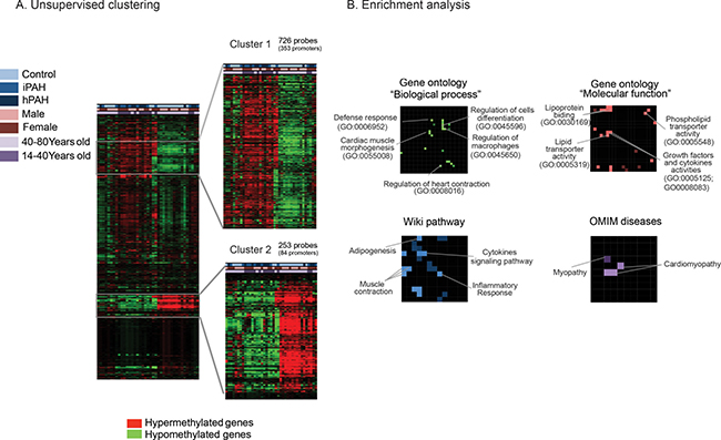 Differential DNA methylation pattern in pulmonary endothelial cells from patients with pulmonary arterial hypertension and controls.