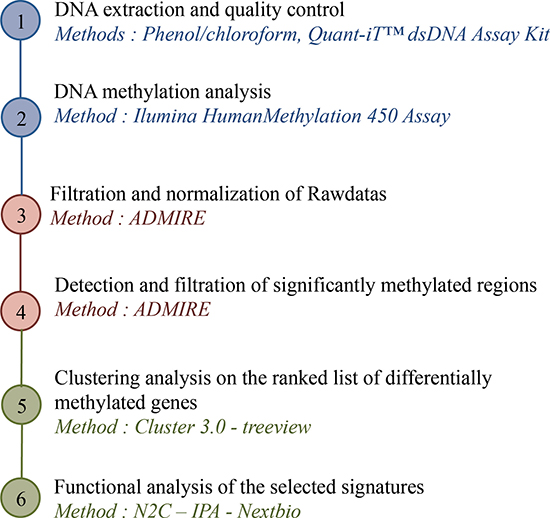 Strategy of DNA methylation analysis: from DNA to targeted promoters.