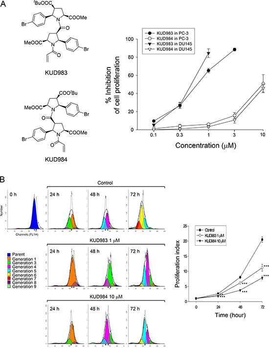 Effect of KUD983 and KUD984 on cell proliferation in PC-3 and DU145 cells.