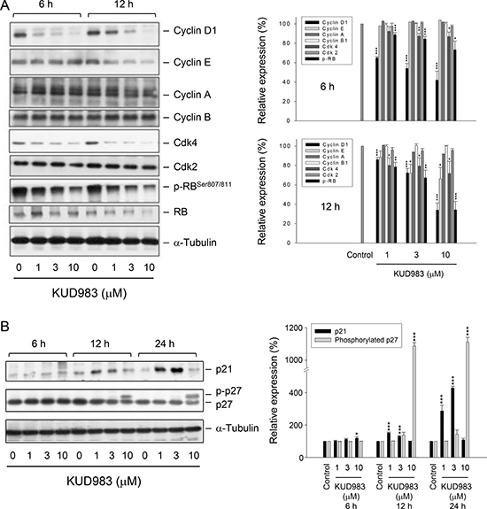 Effect of KUD983 on the expression of several cell cycle regulators.