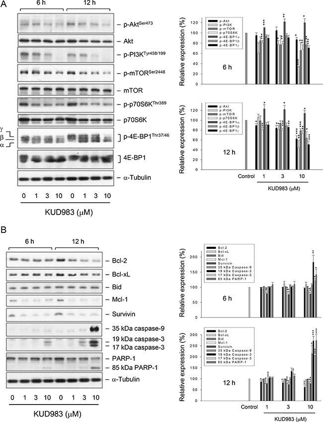 Effect of KUD983 on the expression of several proteins.