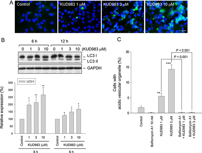 Effect of KUD983 on autophagic cell death.