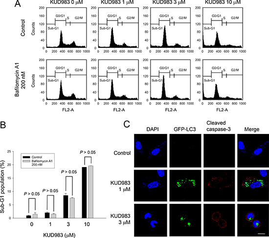 Effect of KUD983 on cell apoptosis and autophagy in PC-3 cells.
