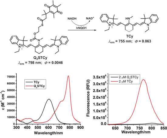 Chemical structure and their absorption and emission profiles of non-activated and activated Q3STCy (Q3STCy and TCy).