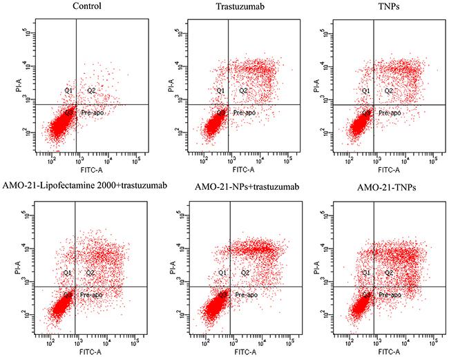 Apoptosis of NUGC4 after exposure to saline, trastuzumab, blank TNPs, AMO-21-Lipofectamine 2000 + trastuzumab, AMO-21-NPs + trastuzumab, and AMO-21-TNPs for 72 hours.