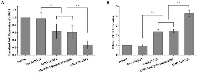 Expression of miR-21 and its target genes PTEN in NUGC4 cells after different treatments (from left to right, saline control, free AMO-21, AMO-21-NPs, AMO-21-Lipofectamine 2000, and AMO-21-TNPs) after 72 h.