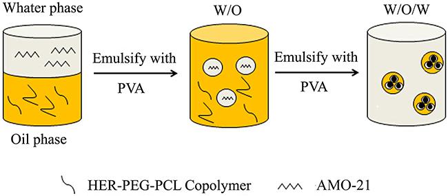 The scheme of AMO-21-HER-PEG-PCL NPs by a double-emulsion solvent evaporation technique (PVA: polyvinyl alcohol; AMO-21: anti-miR-21 oligonucleotide).
