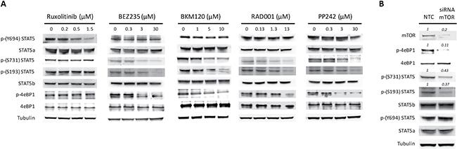 PI3K/mTOR inhibitors modulate phosphorylation pattern of STAT5.