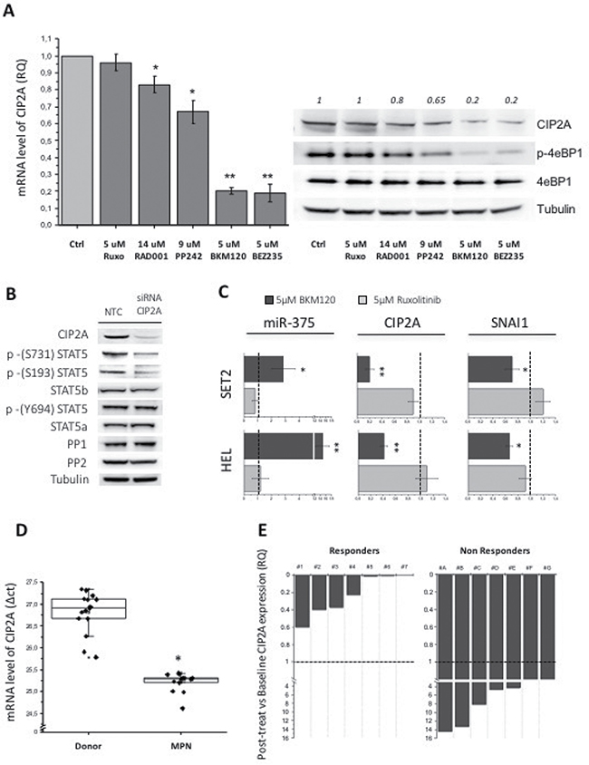The expression of the PP2A inhibitor CIP2A affects the phosphorylation pattern of STAT5 serine residues.