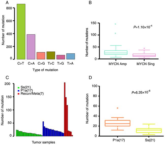 NB somatic mutation characteristics.