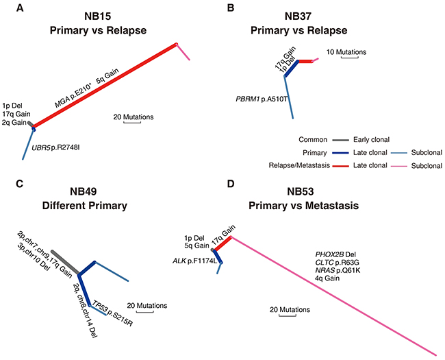 Phylogenetic trees of four spatially or temporally separated NB tumor pairs.