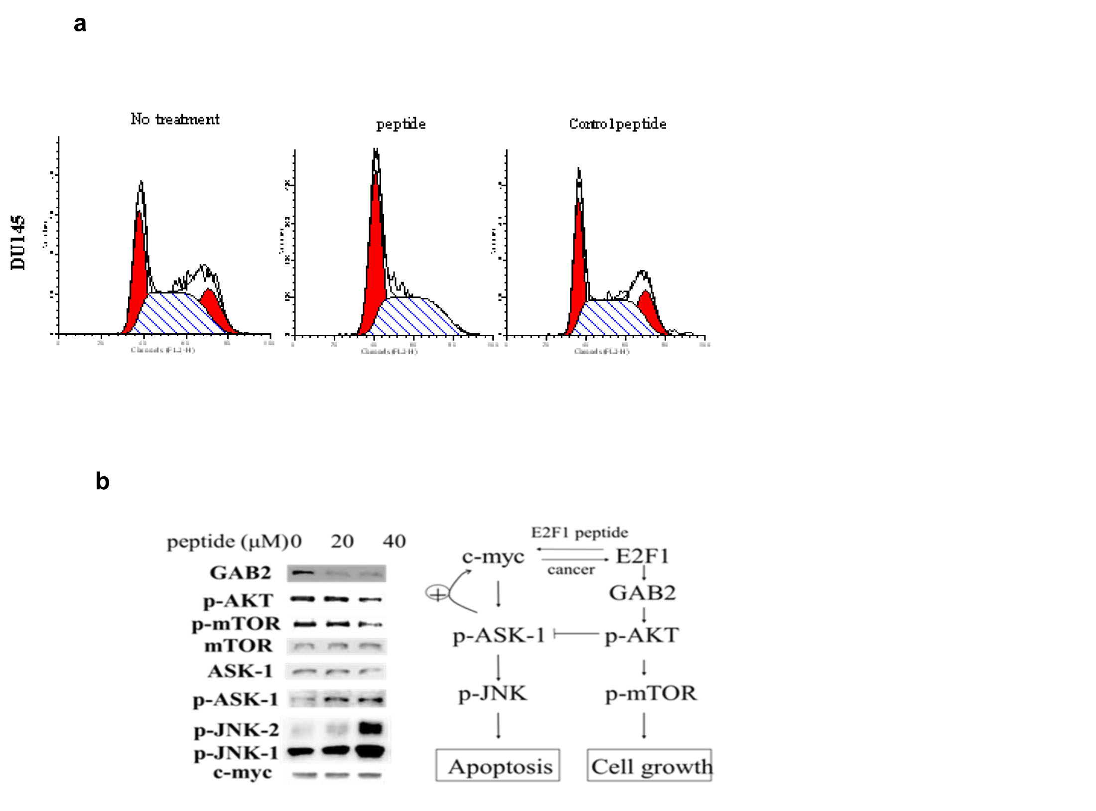 Fig 3: 3a) Effect of PEP on the cell cycle: Following treatment of Du-145 cells with PEP for 12h and PI staining, cells were analyzed by flow cytometry and quantitated (bottom panel).
