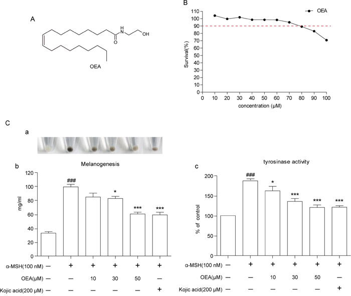 Effect of OEA on cellular melanin synthesis and tyrosinase activity in α-MSH-stimulated B16 cells.