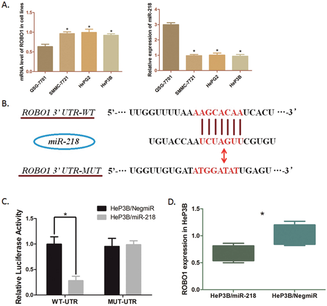 Modulation of ROBO1in HeP3B cells directly regulated by miR-218.