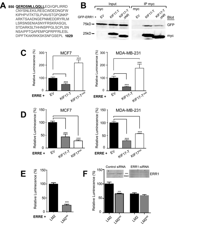 A 12 amino acid peptide in the KIF17-Tail is necessary and sufficient to inhibit ERR1 transcriptional activity.