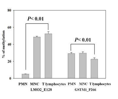 Validation of LMO2_E128 and GSTM1_P266 CG methylation in polymorphonuclear cells (PMNs), peripheral blood mononuclear cells (MNCs) and T lymphocytes.