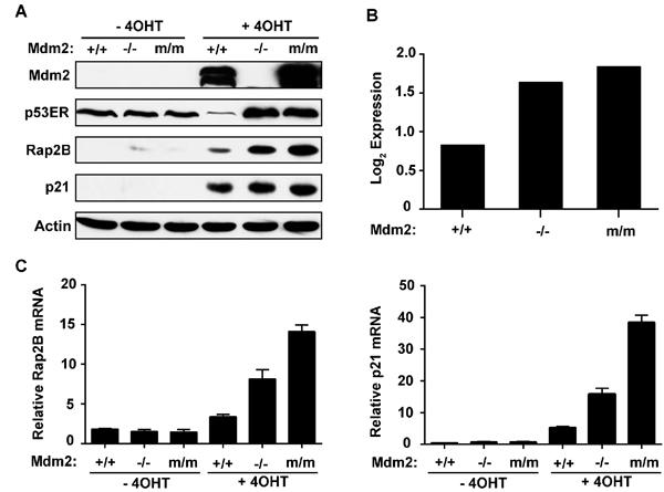 Rap2B is a p53 transcriptional target.