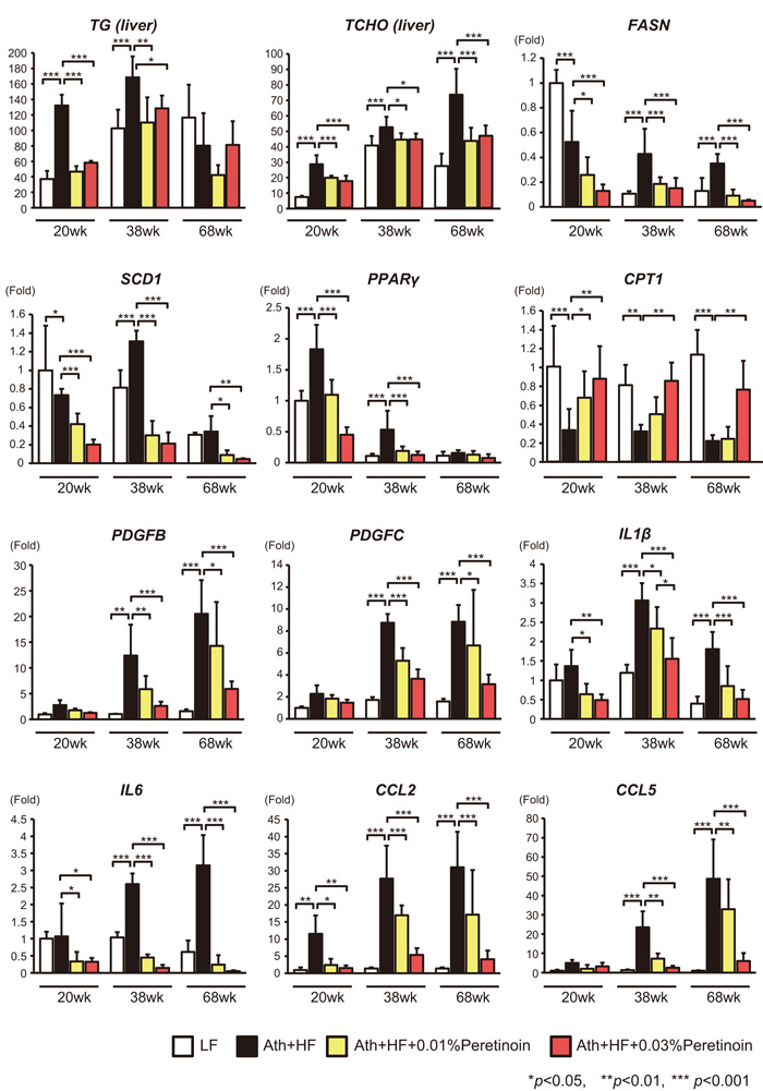 Effects of peretinoin on lipid metabolism, fibrosis, and inflammation.
