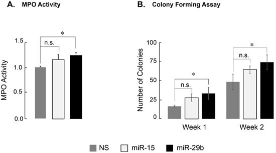 Expression of miR-29b-1 partially relieves differentiation block in leukemia cells.