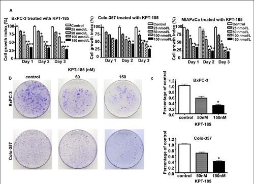 Effects of KPT-185 on PC cell growth.