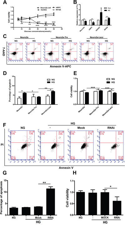 The effect of Trx on neuropathy prior to endothelial damage induced by hyperglycemia in vitro.