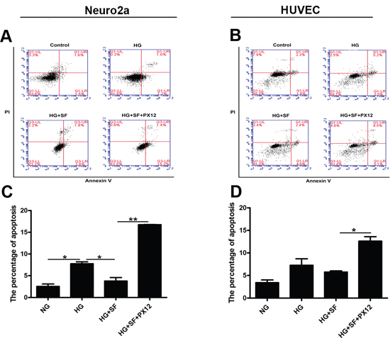 Effect of Trx on the apoptosis of Neuro2a cells and HUVECs.