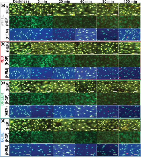 Live–Dead Cell Staining results of different cell lines upon exposure to different color light.