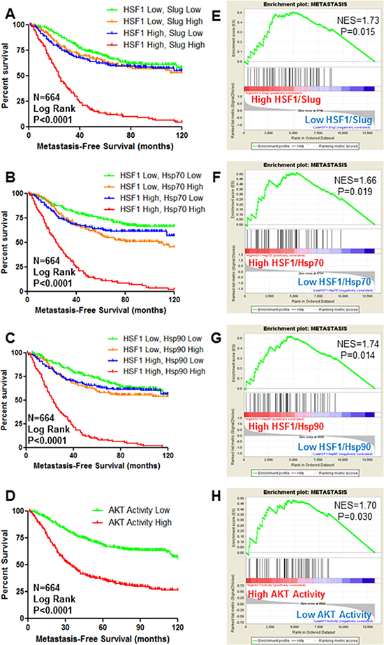 HSF1 and AKT activity are predictors of metastasis-free survival of breast cancer.