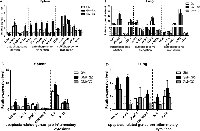 Relative expression of autophagy and apoptosis related genes, and proinflammatory cytokines in NDV-infected chicken spleens and lungs.