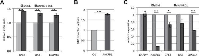 ANKRD1 regulates the expression of tumor suppressor genes.