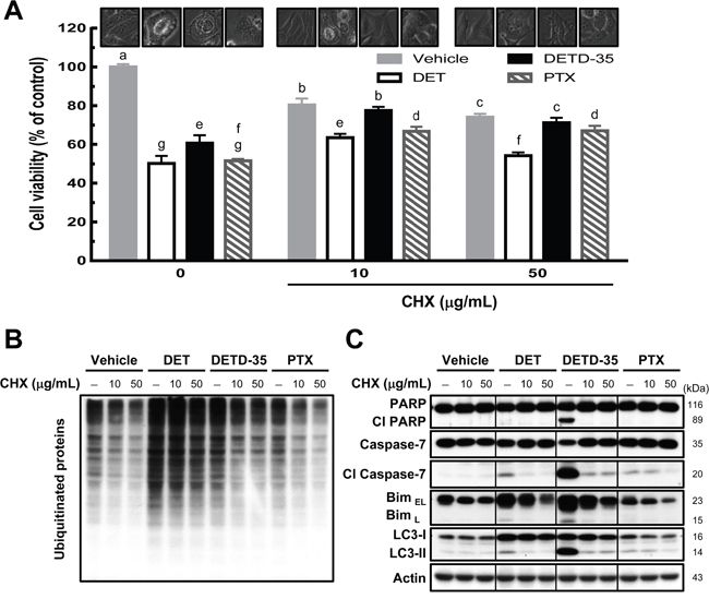 Pretreatment of protein synthesis inhibitor prevents DET- and DETD-35-triggered cytoplasmic vacuolation death in TNBC cells.