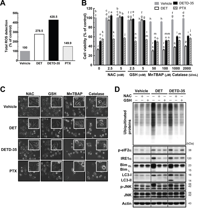 Pretreatment with either NAC or GSH prevents DET and DETD-35 induced ROS production and cytoplasmic vacuolation-mediated cell death.