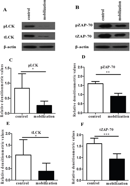 G-CSF decreased the expression of Lck and ZAP-70.